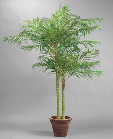 areca palme 210cm elises verden din leverand r av kunstige blomster kunstige planter. Black Bedroom Furniture Sets. Home Design Ideas